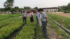寻甸县2015年林木良种补贴项目顺利通过省级核查验收
