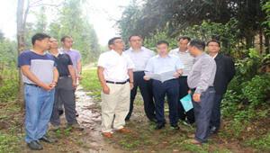 省林业厅领导调研德宏重大林业有害生物危害态势与防控