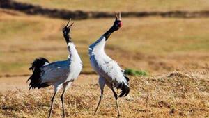 寻甸黑颈鹤自然保护区农地退耕还湿顺利开展