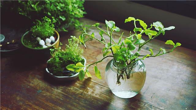 过期药片能助植物疯长 还有这种操作?