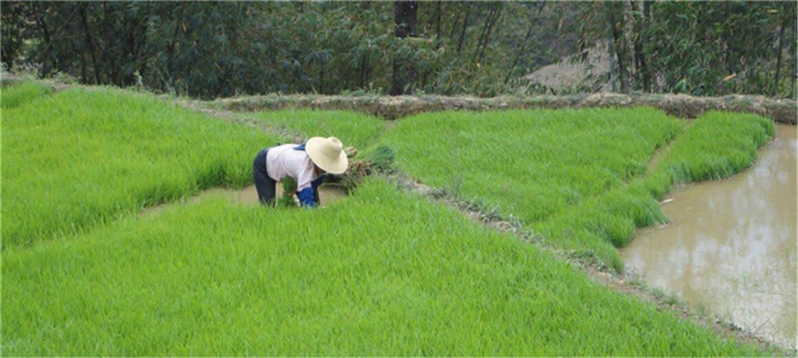 红河州绿春县:产业提质促增收