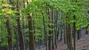 云南率先提出启动林业技术创新体系建设