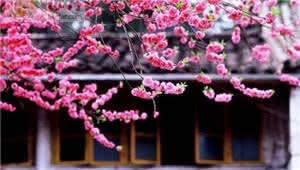 央视纪录片《花开云南》在通海完成初期拍摄