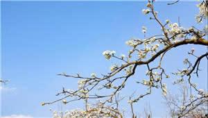 拍客|春天的万溪冲,从沉寂到一树繁花