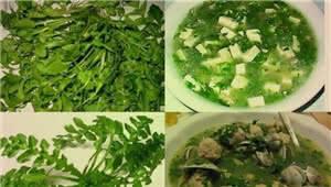 拍客|春天里,野菜香 你吃过几种?
