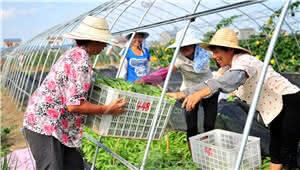昆明:今年特色产业将覆盖所有贫困村