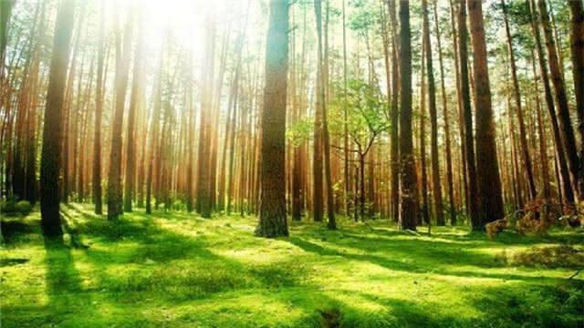 空中监控 信息联通 科技为昆明森林防火添保障