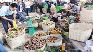 注意!云南进入菌子中毒高发季 采食蘑菇需谨慎