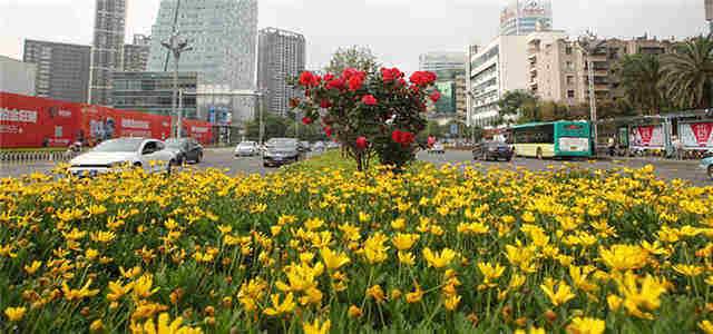 期待!北京路拟增40多种植物 6月底焕新颜