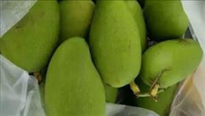 在云南,没有青果配盐巴辣子吃的夏天就不算真正的夏天!