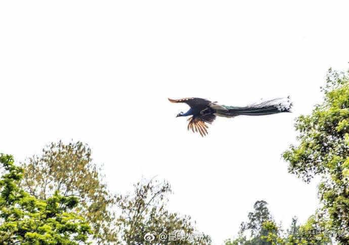 书上说,孔雀东南飞,五里一徘徊。