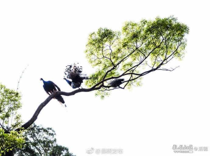 """""""飞上枝头变凤凰。"""""""