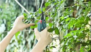 植物修剪大法 了解一下?