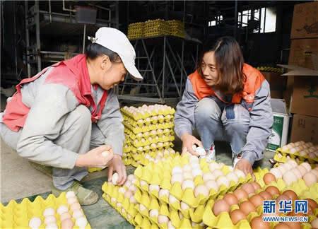 刘艳(右)和工人在养殖场整理外销的鸡蛋。