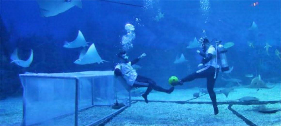 """这样的""""海底世界杯""""你看过没?"""