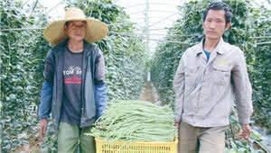 禄丰:花卉产业助农增收