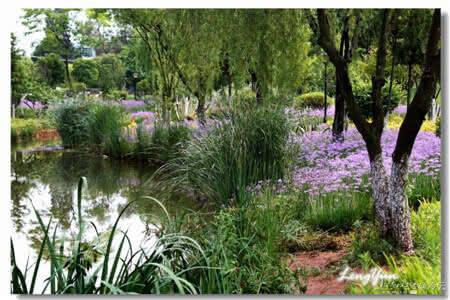 一说起紫色花海,人们就想到法国普罗旺斯的薰衣草,其实完全不用跑那么远,来昆明,就可以同样拥有紫色浪漫哦。