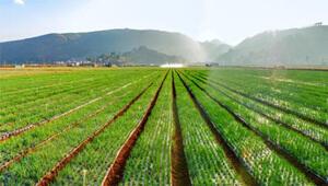 跟着致富带头人 泸西水果之乡几乎家家种上高原梨