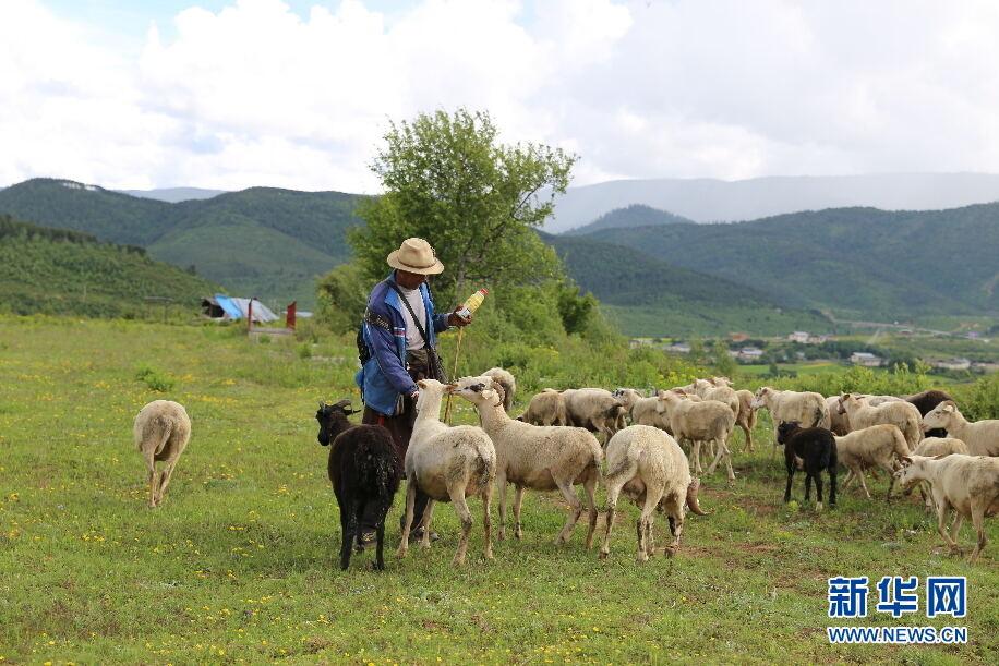 牧民在草场上放牧。