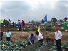 3000余人相聚武定 2018中国云南蔬菜种业博览会开幕