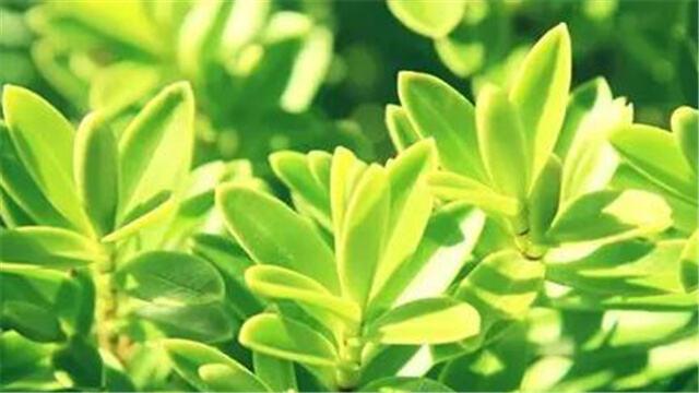 植物发黄的原因你真的清楚吗?