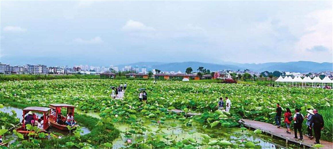 观赏拍照很热闹!澄江旅游人气旺