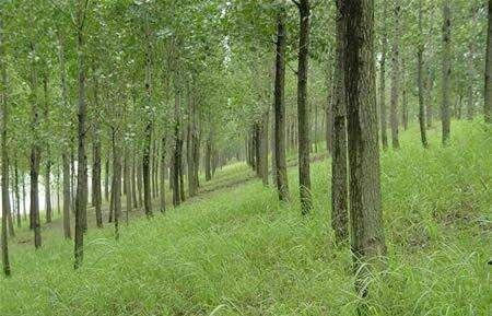昆明市森林公安局副局长张明慧到阳宗海农村工作局指导工作