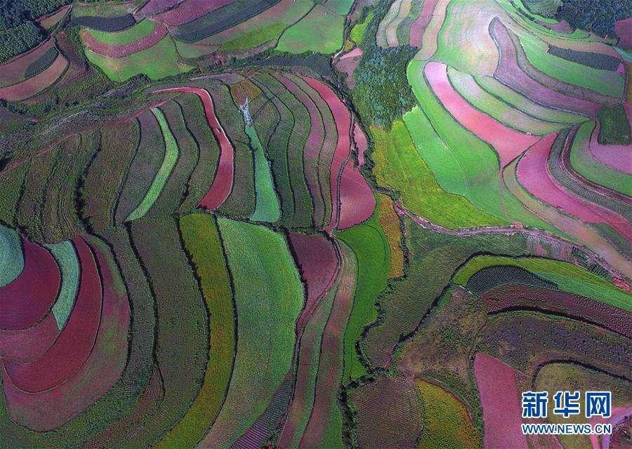 拍客|飞越东川红土地