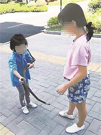 遛蛇让娃练胆?专家:更应加强保护野生动物教育