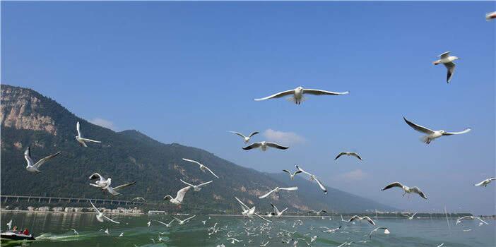 云南日报头版头条点赞滇池治理:两岸变美 生态修复