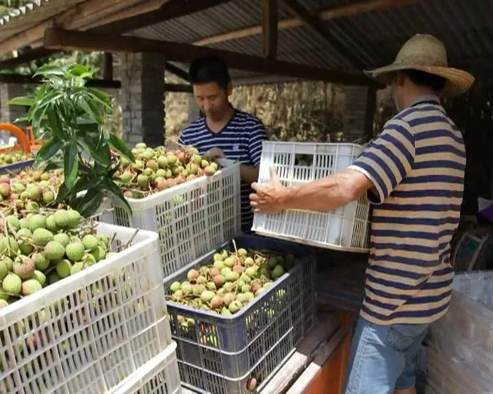 屏边:生态产业发展助力脱贫