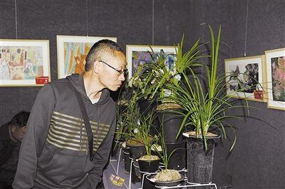 曲靖市兰花协会举办第二十九届兰花展