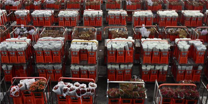 中国日报:情人节昆明斗南花市鲜花销售火爆
