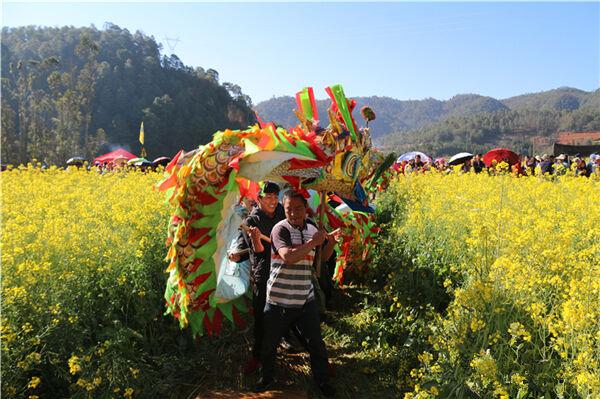 人在花中醉!峨山县油菜花暨开新街文化旅游节开幕