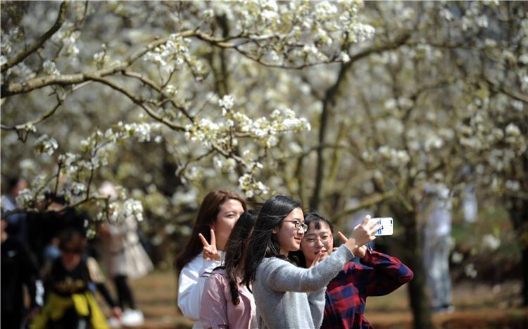 """聚力""""两枝花"""" 昆明呈贡全力打造世界春城花都"""