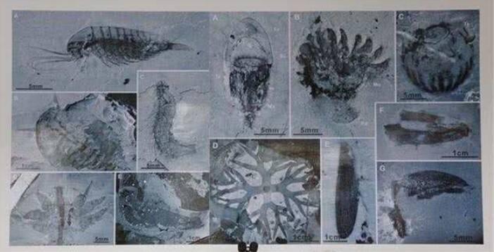 """中国科学家发现5.18亿年前寒武纪""""生物宝库"""""""