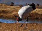 云南首届保护黑颈鹤摄影赛启动
