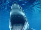 大白鲨亮相昆明 688元门票等你拿