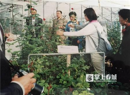 4鲜切玫瑰种植是华明升的主业.jpg