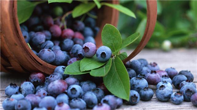 产量剧增 价格下滑 滇产蓝莓亟待深加工突围
