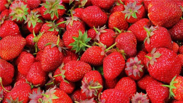 冬草莓接近下市 每公斤直降10元