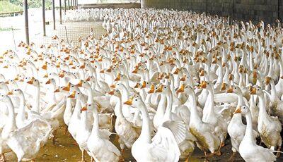 曲靖家庭农场数量全省第一 实现收入5.1亿元