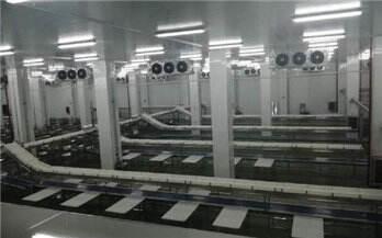 大康农业打造中国肉牛产业航母 目前主销昆明