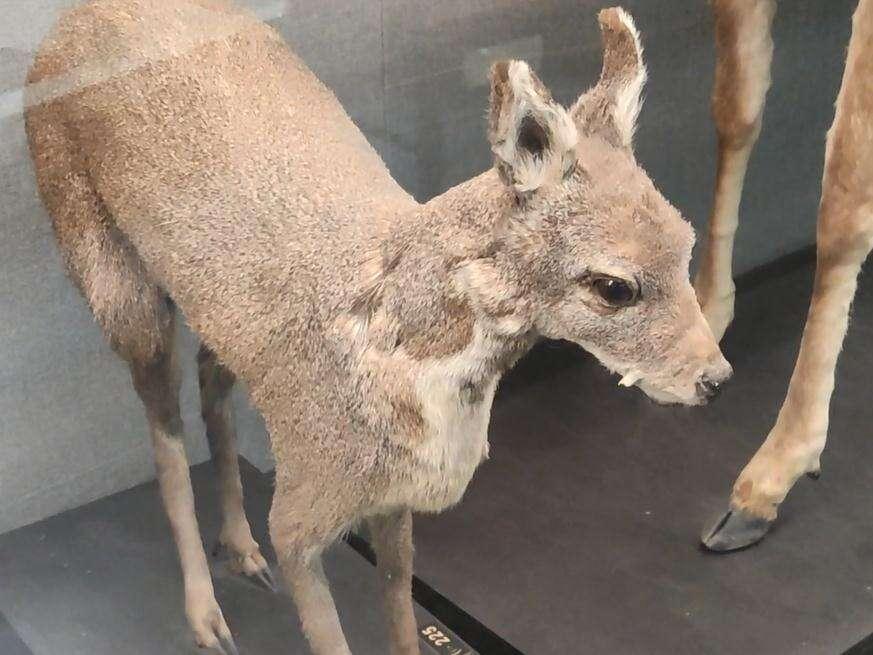 神奇的动物世界!300中学生动物博物馆里探究科学奥秘