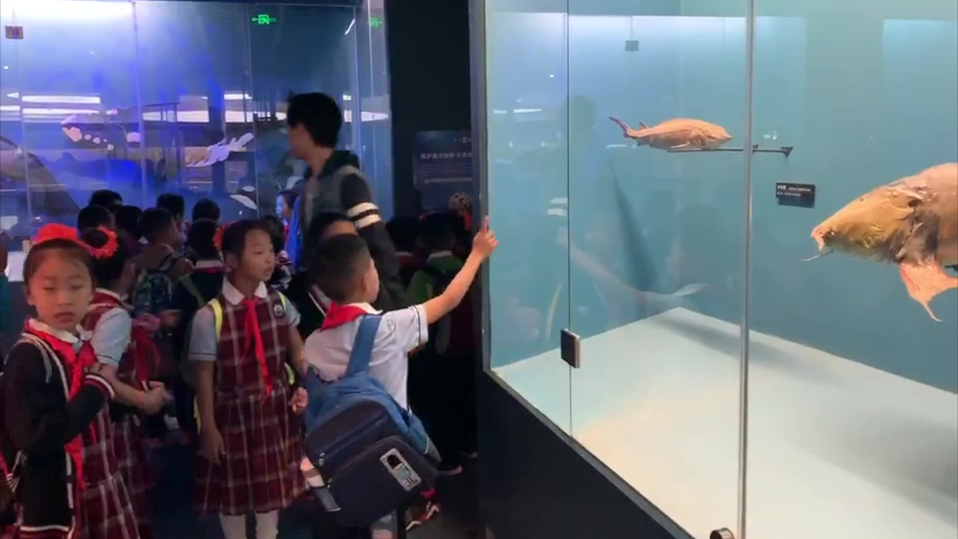 云大附小师生动物博物馆里过儿童节