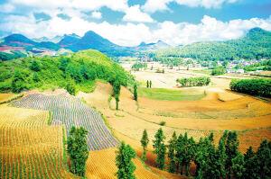 """为贫困户铺""""财路"""" 今年""""多多农园""""将在云南推进5个示范项目"""