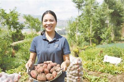 """会泽""""粉嘟嘟""""的小土豆热卖全国"""