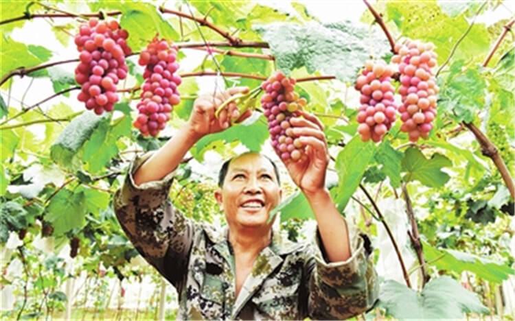 @吃货们,弥勒葡萄已大量上市!