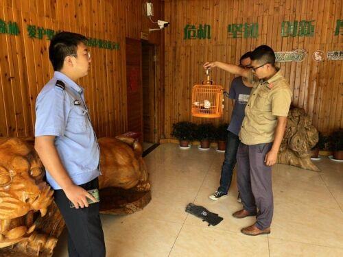 嵩明县自然资源公安局救助一只夜鹰