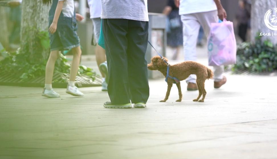 文明养狗 社区难点在哪里?